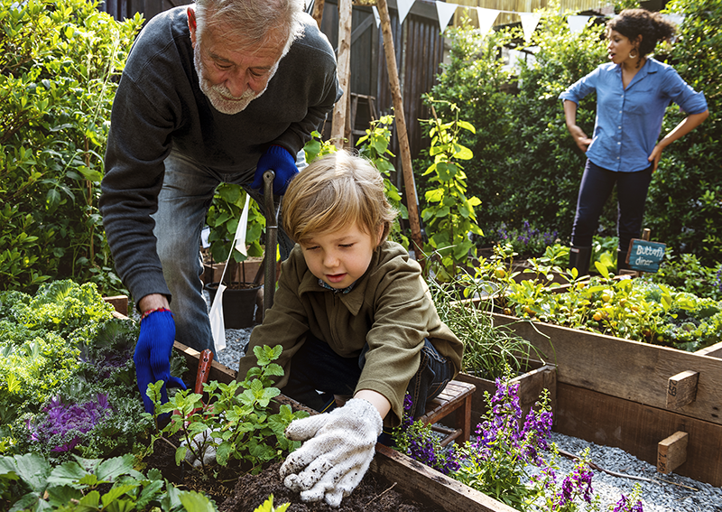 a grandfather and grandson planting flowers