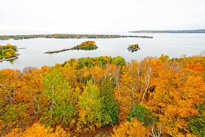 aerial view of trees changing color for the fall