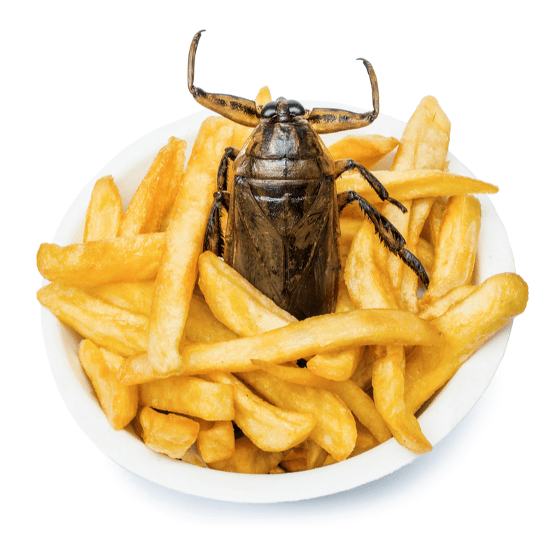 fries with a cockroach